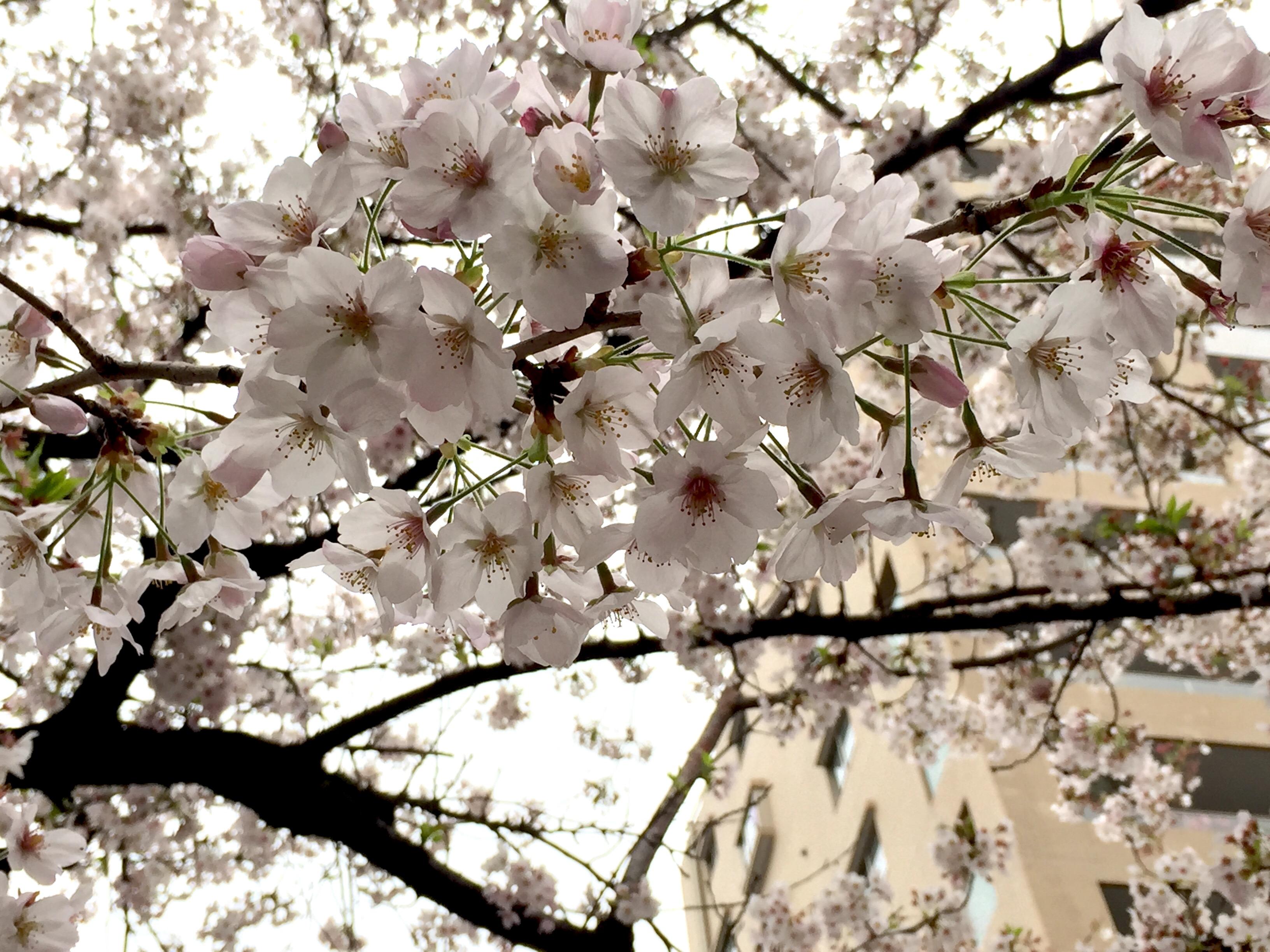 image1 - コピー (5)