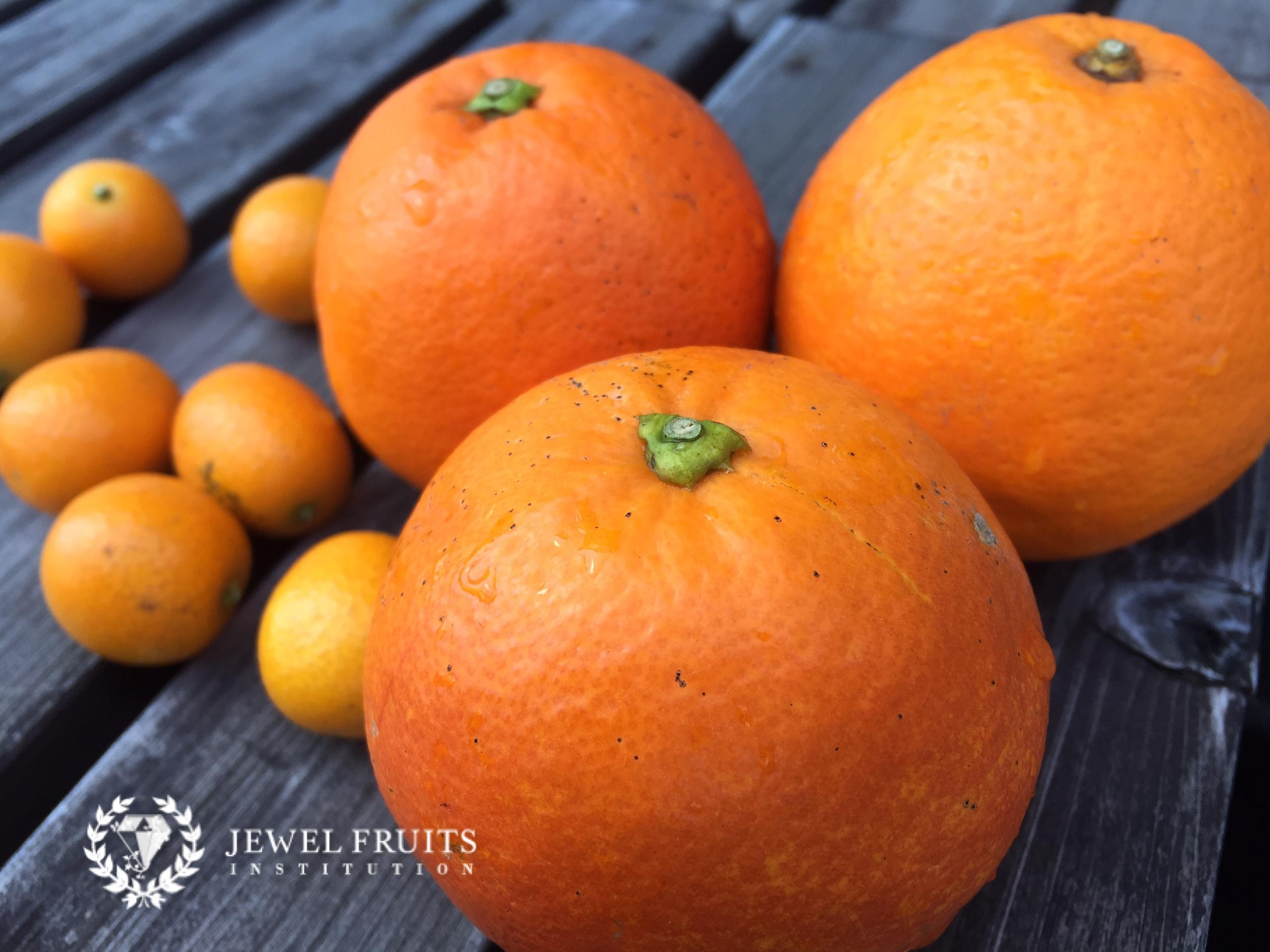 ブラッドオレンジ2